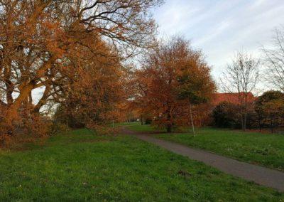 In das Baugebiet einbezogene, alte Wallhecke des Grünzuges am Niedersachsenring