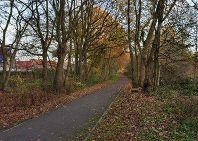 Alte Wallhecken- und Baumbestände am Knollweg